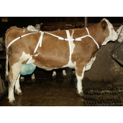 Udder Protection with Neck...