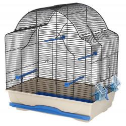 Bird Cage Daisy